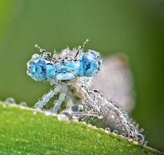 美麗的昆蟲特寫