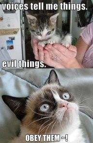 50 Funny Grumpy Cat Memes That Will make your Day… Or Not Grumpy Cat Quotes, Funny Grumpy Cat Memes, Cat Jokes, Funny Animal Jokes, Cute Funny Animals, Funny Animal Pictures, Animal Memes, Funny Cats, Funny Cat Quotes