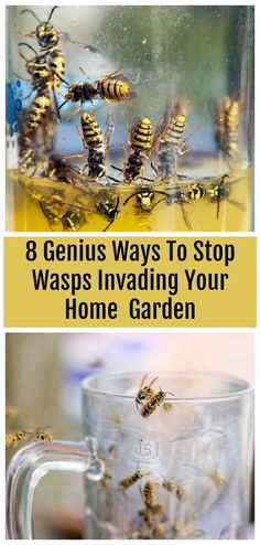 If wasps are ruining all of your outdoor events then try these clever tricks to keep them away. Number one works so well! plants like spearmint, thyme, citronella, eucalyptus, and wormwood serve as natural wasp deterrents Wasp Deterrent, Insect Repellent, Natural Bee Repellent, Fly Repellant, Get Rid Of Wasps, Bees And Wasps, Getting Rid Of Bees, Wasp Traps, Wasp Trap Diy