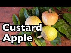 All About Custard Apple! - YouTube
