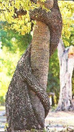tree hugger...