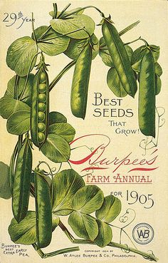 1905 Ad Illustration for Burpee's Seed's - good site for lots of different seed packets.dc 🌻 For more great pins go to Vintage Diy, Vintage Labels, Vintage Ephemera, Vintage Paper, Vintage Postcards, Vintage Images, Seed Art, Vintage Magazine, Vintage Seed Packets