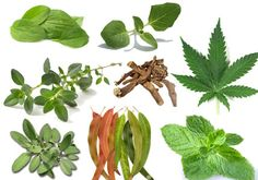 15 Plants and Herbs That Can Boost Lung Health, Heal Respiratory Infections And Even Repair Pulmonary Damage:  http://preventdisease.com/news/14/012214_15-Plants-Herbs-Boost-Lung-Health-Heal-Respiratory-Infections.shtml