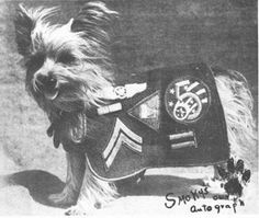 Smoky the Dog Hero of WWII; she pulled telephone wires  through a long pipe in Luzon, saving days of construction and the lives of soldiers working in dangerous combat situations. In 1944, she was also named the Mascot of the Pacific Southwest Theatre of war operations.