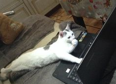 And this cat who learned how to code. | 18 Pictures That Prove Cats Are Evolving