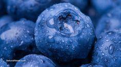Blauwe bessen voor een langer leven