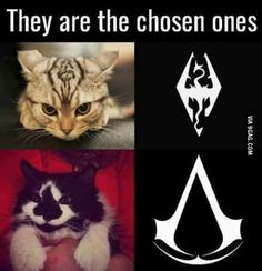 Skyrim and Assassin's Cats // funny pictures - funny photos - funny images - funny pics - funny quotes - Video Game Memes, Video Games Funny, Funny Games, Animal Memes, Funny Animals, Cute Animals, Gamer Humor, Gaming Memes, Gamer Cat