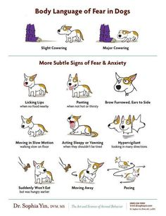 Subtler signs of dog anxiety. Learn more about behavior and training at  drsophiayin.com