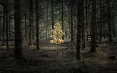 Picture of a painted tree in a forest (Inside a Real-Life Fairy Tale Forest) / Photographer Ellie Davies Fairy Tale Forest, Forest Art, Dark Forest, Fairy Tales, Forest Photography, Outdoor Photography, Landscape Photography, Art Photography, Land Art