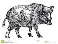 drawings of wild hogs