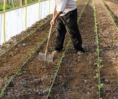 Defining Sustainable Agriculture