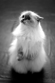 Awww pretty please? Oh of course you may sweet kitty ♥