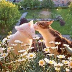Pretty Cats, Cute Cats, Beautiful Cats, Cute Kitty, Adorable Kittens, Kitty Kitty, Baby Cats, Cats And Kittens, Baby Farm Animals