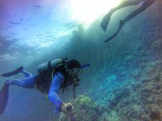 2 dias e 1 noite mergulhando na Great Barrier Reef em Cairns na Austrália  Mais um sonho realizado  É a maior barreira de corais do Mundo dizem que dá pra ver essa barreira do espaço  Vou ter que ir até lá pra conferir essa informação  #blogmochilando #greatbarrierreef #cairnsdivecenter #mergulho #sonho by brunotavaress http://ift.tt/1UokkV2