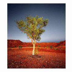 Peter Eastway is an Australian photographer known internationally for his landscape photography and creative use of post-production. Hurley, Landscape Photography, Infinity, Country Roads, Gallery, Creative, Painting, Art, Fotografia