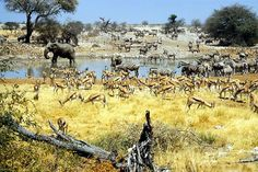 animals at watering hole