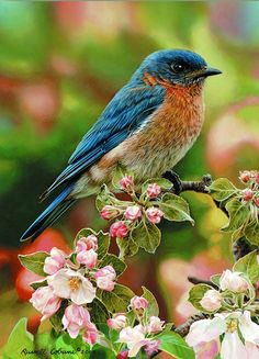 Bluebird and apple blossoms by Russell Cobane