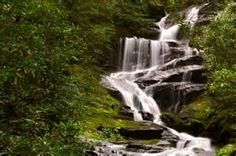 pisque national forest, nc - Bing Images
