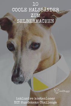 #Hunde    #DIY    Halsband    Selbermachen    Tipps    Ideen    Hund