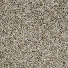 Carpeting By Shaw Floors In Style Quot French Meadows Accent