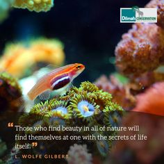 The natural world is a myriad of colours, life forms, stories and life lessons. May these words from American songwriter L.Wolfe Gilbert inspire you to value, observe, admire and learn from nature.  #MotivationMonday #Conservation #Dilmah #NoCompromise #DilmahConservation #DiversityofLife #LoversofLife #motivationalquotes #Mondaymotivation #inspire #interconnected #wellness #planetwellness #quotes #inspirationalquotes #sustainable #sustainabledevelopment #sustainabilty #nature