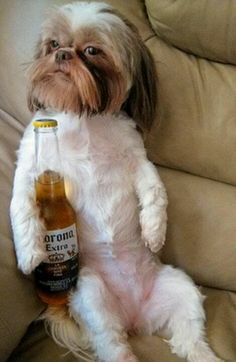 My Maggie...well she has a drinking problem. They said it could be hereditary…