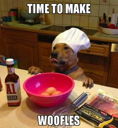 Woofles (I need as many funnies and cute animals as I can possibly take this week. If it's a two for one special-EVEN BETTER)