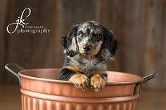 Minnie : : Olympia Puppy Photographer | JK Photography