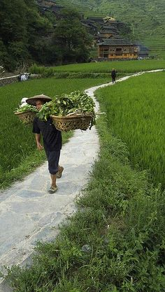farming, Guizhou, China