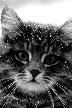 Adorable kitten in the winter snow