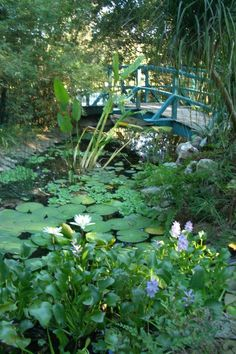 Giverny France, Monet's garden. One of the best places I have ever been