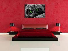 green eyes Eule, USA Bild auf Leinwand, XXL riesige Bilder fertig gerahmt mit Keilrahmen. Kunstdruck auf Wandbild mit Rahmen. Günstiger als Gemälde oder Ölbild, kein Poster oder Plakat , Format:60x40 cm: Amazon.de: Küche & Haushalt