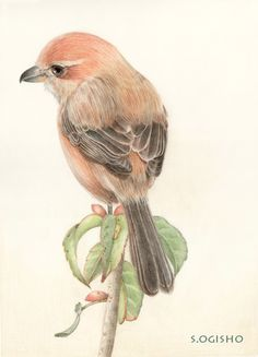 Color Pencil Art, China Painting, Xmas Cards, Colored Pencils, Projects To Try, Birds, Watercolor, Drawings, Illustration