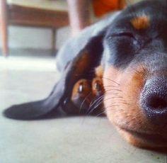 Dozing doggie