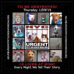 12 DOG BABIES SCH TO DIE THURSDAY 1/29/15. PLS PRAY, RT, PLEDGE IF U CAN, FOSTER OR ADOPT.  https://www.facebook.com/media/set/?set=a.611290788883804.1073741851.152876678058553&type=3&__tn__=%2As ….
