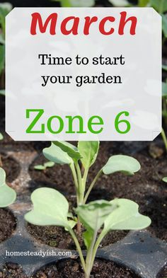 What to do in your garden in March March gardening list of plants you should start for zone This guide will take some of the guesswork out of when to start your seeds and what can be planted outside in your garden. Vegetable Planting Guide, Garden Plants Vegetable, Garden Pests, Zone 6 Plants, Plant Zones, When To Plant Vegetables, Planting Vegetables, Planting Seeds, Starting A Garden