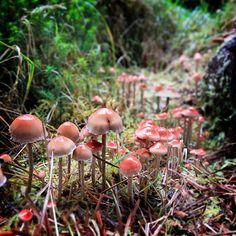 Campo de Cogumelos Cor-de-Rosa ♥