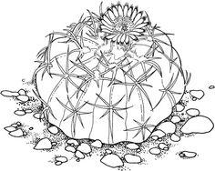 Drawing cactus Homalocephala Texensis or Horse Crippler Cactus