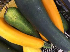 squash 2018 Fruits Photos, Farm Stand, Squash, Pumpkins, Gourd, Pumpkin