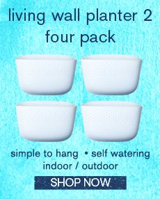living wall planter 2 four pack