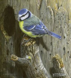 The Art of Dick Twinney - Cornish Wildlife Artist