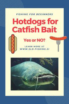 Fishing Bait, Best Fishing, How To Catch Catfish, Catfish Recipes, Catfish Bait, Fishing For Beginners, Mammals, Hot Dogs, Hunting