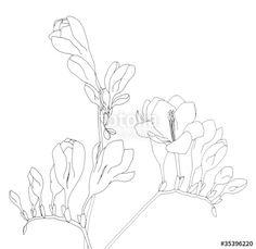 Line drawing of freesia Kids Watercolor, Watercolor Flowers, Line Drawing, Drawing Sketches, Freesia Flowers, Pen And Wash, Diy Artwork, Making Ideas, Flower Art