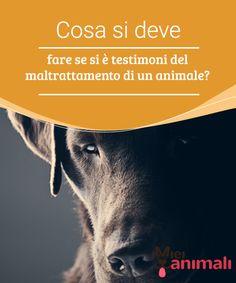Cosa si deve fare se si è testimoni del maltrattamento di un animale?   Il #maltrattamentoanimale è un argomento #delicato, soprattutto perchè coinvolge la salute ed il benessere di un essere #vivente. #Consigli