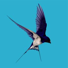 Barn Swallow by Graphic Stew, via Flickr
