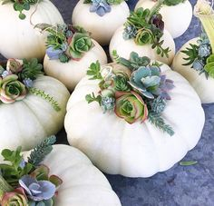 Autumn white pumpkins + succulents- why can't you live closer @tcslye?! Love these! #falldecor #friyay #followfriday