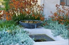 Native Australian Garden by Janine Mendel WA Landscape Designer Australian Garden Design, Australian Native Garden, Patio Fountain, Fountain Design, Small Water Gardens, Dry Garden, Glass Garden, Coastal Gardens, Water Features In The Garden