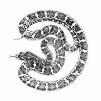 Snake by Oak-Deer Deer, Snake, Letters, Deviantart, Gallery, Artist, Roof Rack, Artists, A Snake