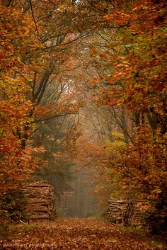 ✯ Gorgeous Autumn Trees