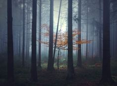 Brothers Grimm-Inspired Photos Reveal Haunting Fairytale Worlds - My Modern Met